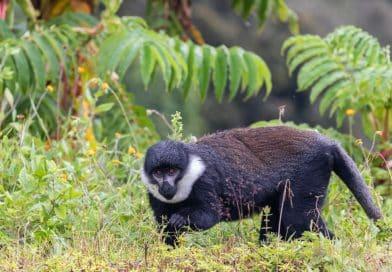 Fotoalbum Rwanda - www.edvervanzijnbed.nl